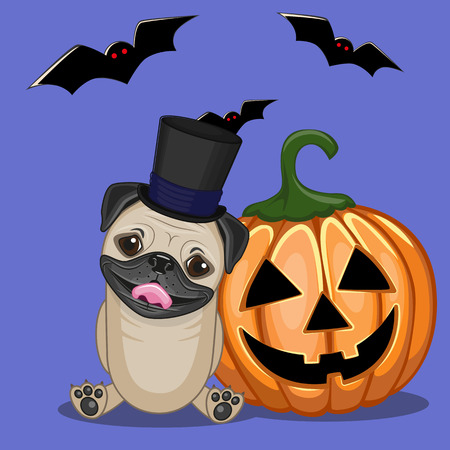 pug dog: Halloween illustration of Cartoon Pug Dog with pumpkin