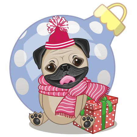 pug dog: Pug Dog in a hat with gift