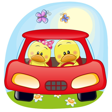 two ducks: Two Ducks is sitting in a car