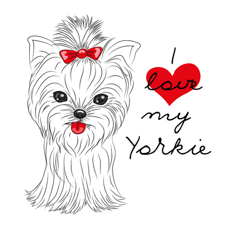 Cute Yorkshire Terrier on a white background Illusztráció