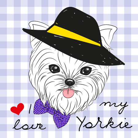 yorkshire: Cute Yorkshire Terrier with hat on a plaid background