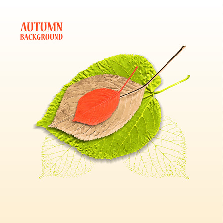 linden: Autumn background with leaves. Linden and cherry.  Vector illustration.