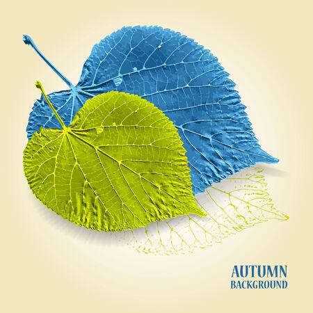 lindeboom: Herfst achtergrond met bladeren. Linden in blauw en groen. Geschreven tekst op de achtergrond. Vector illustratie.