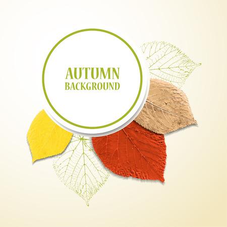 lindeboom: Herfst achtergrond met bladeren. Linden en kersen. Vector illustratie. Eps 10