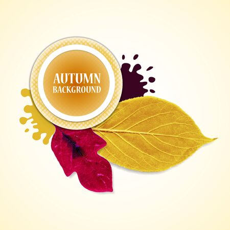 leafs: Autumn background with leafs and stains. Redviolet  and yellow. Vector illustration.