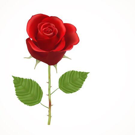 Blooming Rose rouge, vecteur, fleur isolé, floral, plante, valentine, amour, roman, épouser, dater, anniversaire Banque d'images - 66786847