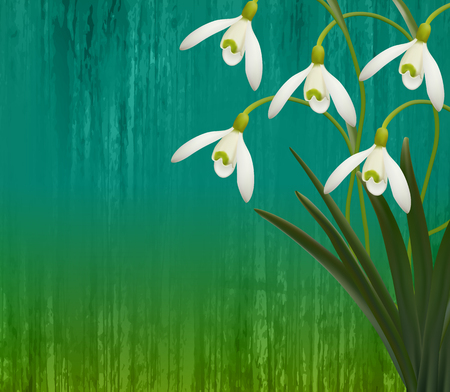 Floral background. Spring flowers. Snowdrops. eps 10