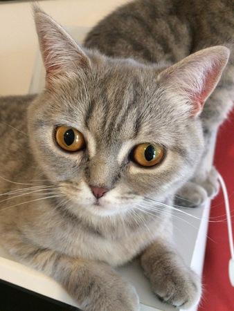 Little cat lady