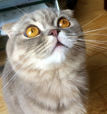 Astounded cat with big eyes