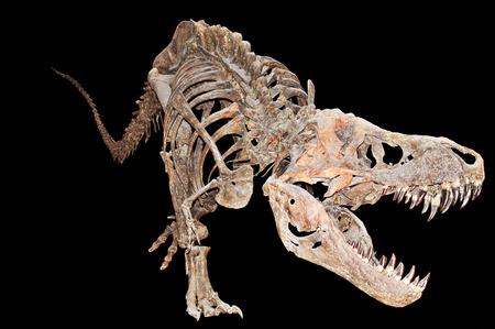 rex: Tyrannosaurus Rex Skeleton
