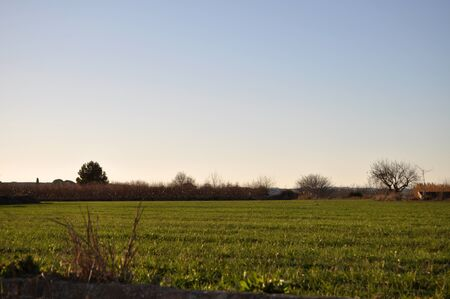 bucolic: Sunset shoot in a cultivated field