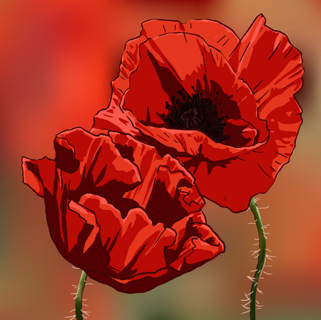 Two red poppies on a blurred background.