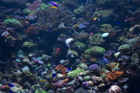 coral reefs and fish in an aquarium