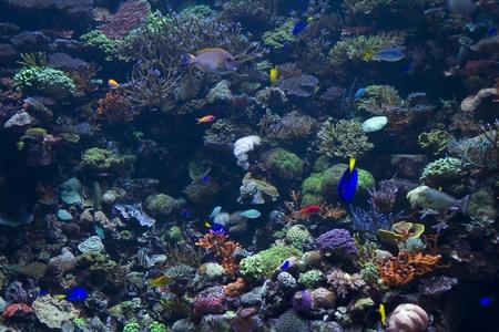 fishtank: fishtank aquarium