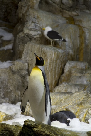 penguin at attention Imagens