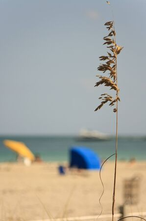 springbreak: beach scenery