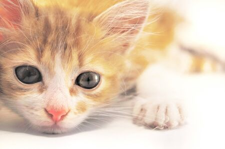 close-up of red-haired kitten laying photo