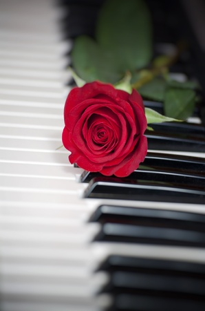 red rose on piano keyboard photo