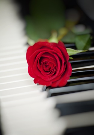 white sheet: red rose on piano keyboard Stock Photo