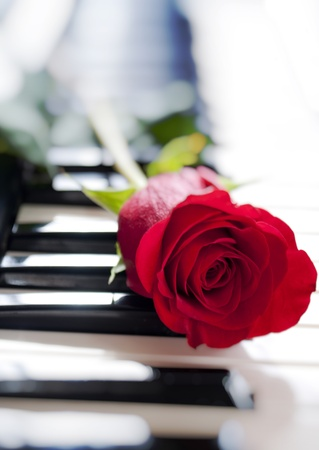 red rose on piano keyboard Stock Photo - 8915364