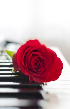 red rose on piano keyboard Stock Photo - 8915358