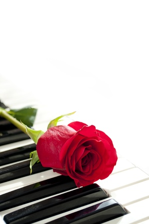 passion play: red rose on piano keyboard Stock Photo
