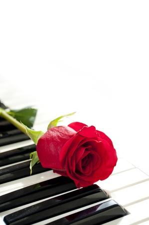 piano closeup: red rose on piano keyboard Stock Photo