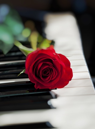 red rose on piano keyboard Stock Photo
