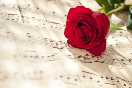 white sheet: red rose on notes sheet Stock Photo