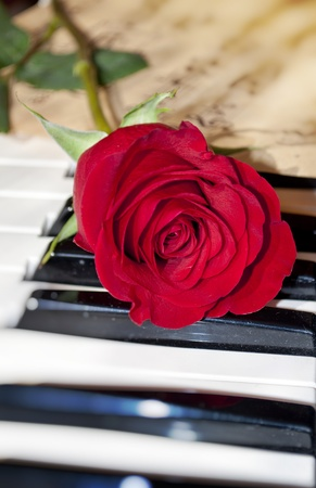 red rose on piano keyboard Stock Photo - 8915371