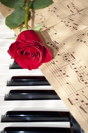 white sheet: red rose on piano keyboard and notes sheet