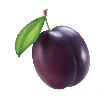 plum: painted plum on white background