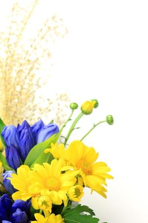 japanese chrysanthemum: chrysanthemum and gentian and Japanese pampas grass