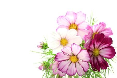 arreglo floral: Cosmos Foto de archivo