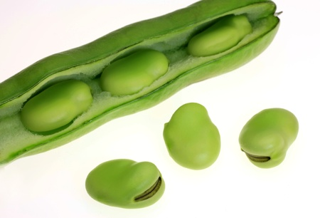 leguminosae: broad beans