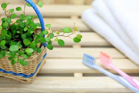 歯ブラシと植物