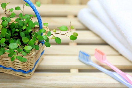 toothpaste: toothbrushes and plants Stock Photo