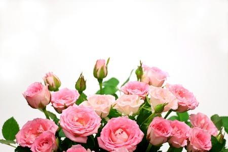 arreglo floral: rosa Foto de archivo