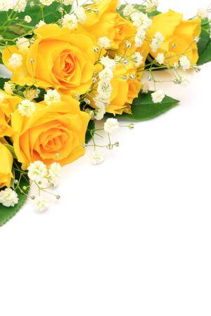 黄色いバラ 写真素材