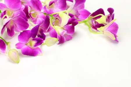 I took dendrobium in a white background.