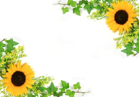I attached ivy to a sunflower and took it in a white background. photo