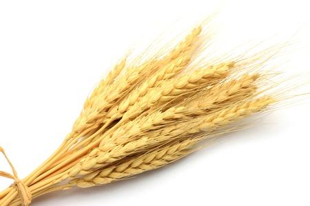 白い背景で、小麦の耳を取った。 写真素材
