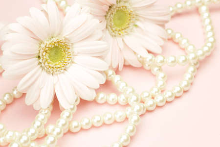 barberton daisy: I took gerbera and  pearl in a pink background