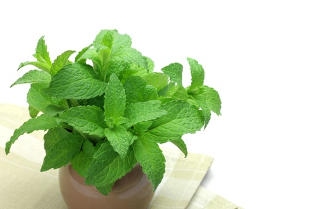 I put a mint in tableware and took it in a white background  Stock Photo