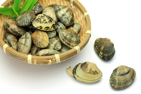 fishery products: I put many short-necked clams in a colander and took it in a white background