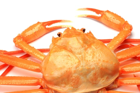 I took deep red snow crab in a white background  photo