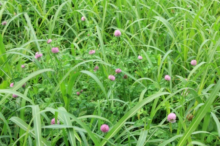 the Japanese grass Stock Photo - 16003830