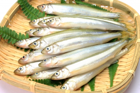 These are called wakasagi in Japanese freshwater fish  Stock Photo