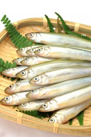 pond smelt: These are called wakasagi in Japanese freshwater fish  Stock Photo