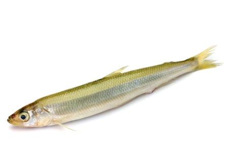This is called wakasagi in Japanese freshwater fish Stock Photo - 16334171